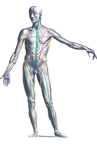 Fascial Distortion model illustration